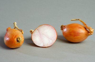 photo échalote variété bruneor