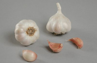 garlic photography of fructidor variety