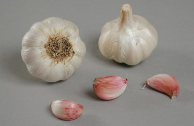 photo ail variété jardirose