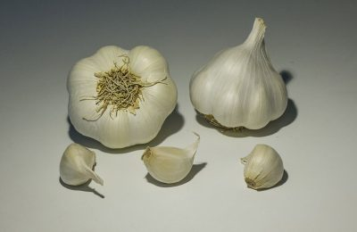 garlic photography of sabagold variety