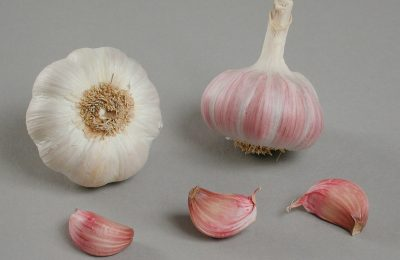 garlic photography of sultop variety