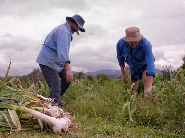 Photo jardiniers qui récoltent de l'ail