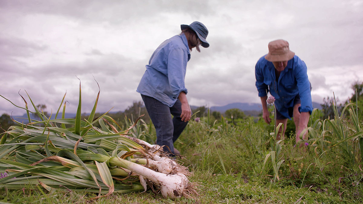 photo jardiniers qui récolte de l'ail