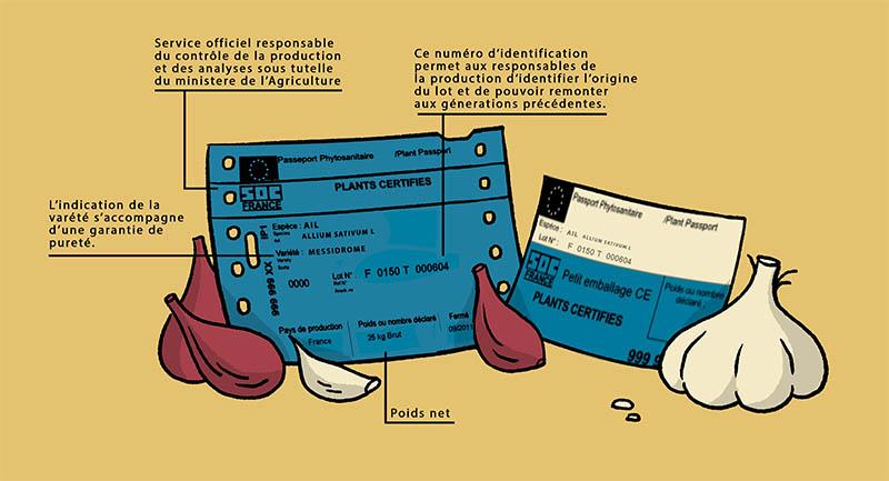 Dessin de certificat et vignette SOC à coté d'ail et d'échalote