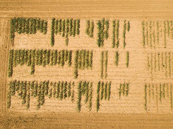 Photo aérienne d'un champ de contrôle d'ail